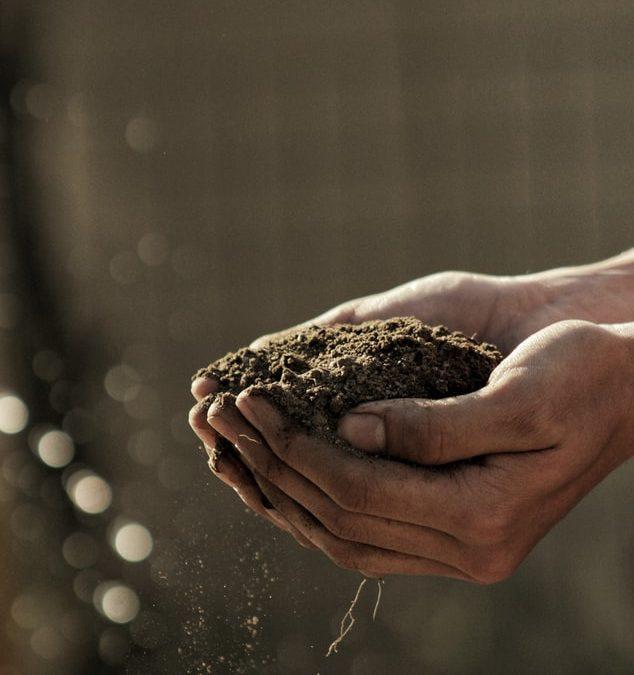 Les moyens d'améliorer le sol des jardins